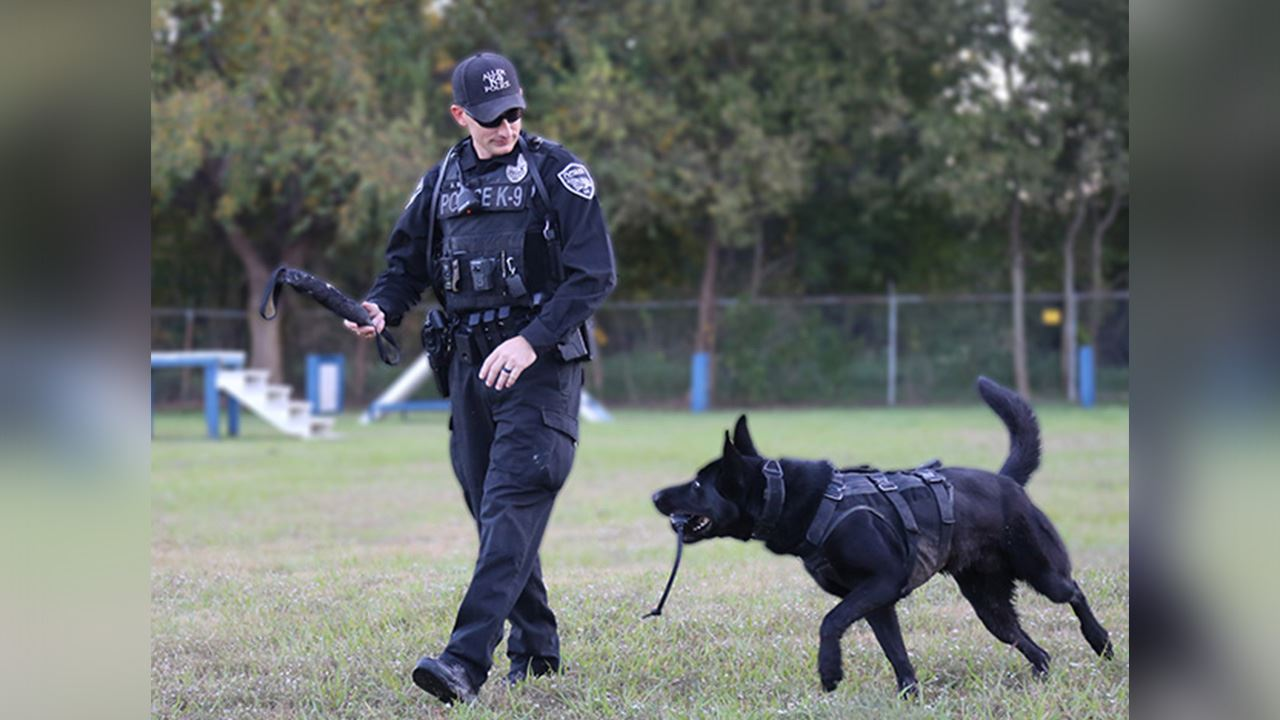 Allen Police K-9 and police officer training outside with baton