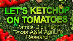 Let's Ketchup on Tomatoes